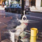 Holanda trabaja en el bienestar de las mascotas
