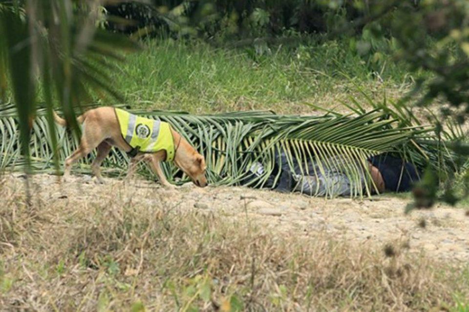 Hallaron 8 muertos de banda 'Los Rastrojos' en Cúcuta