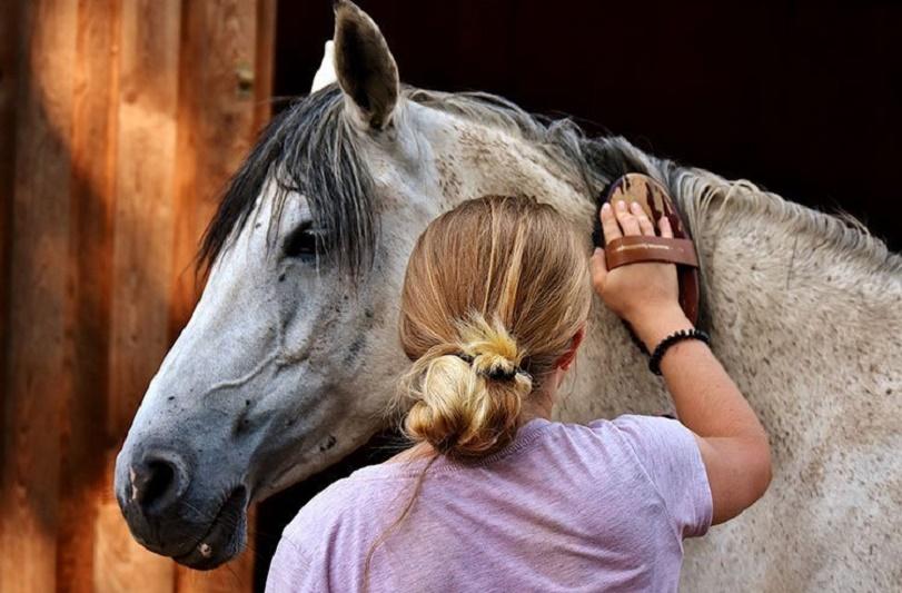 Juan Carlos López Tovar - ¡Conócelas! ¡Cinco maneras fáciles de cuidar a un caballo! - FOTO