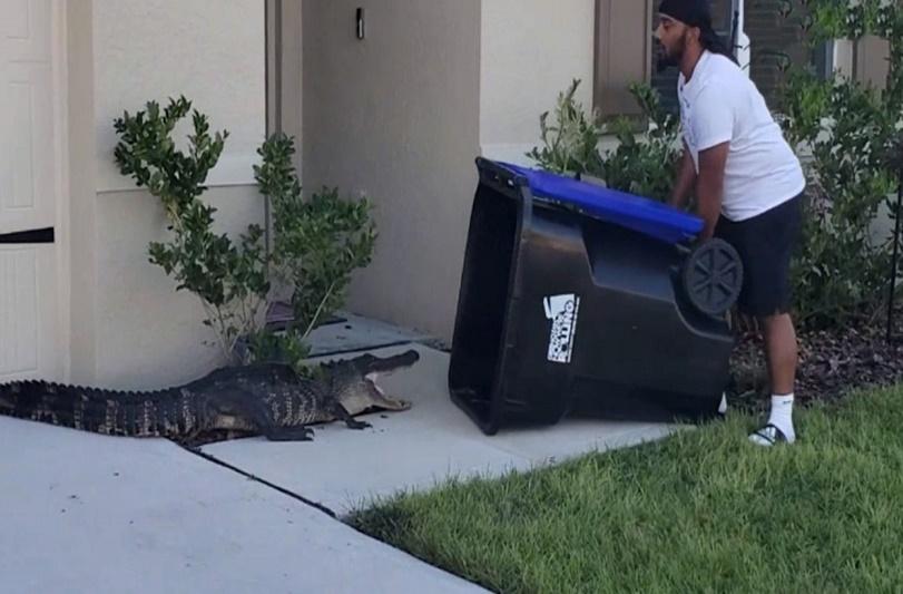 ¡Qué locura! ¡Hombre usa contenedor de basura para atrapar a un cocodrilo! - FOTO